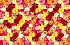 五颜六色的花框架玫瑰 库存照片