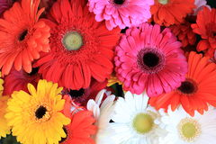 五颜六色的花混合 图库摄影