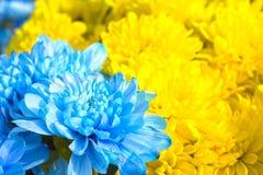 五颜六色的花特写镜头、黄色和蓝色花束  免版税库存照片