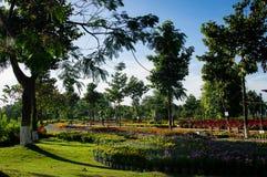 五颜六色的花田在一个公园在早晨白天 免版税库存图片