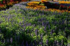 五颜六色的花田在一个公园在阳光下 免版税库存照片