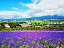 五颜六色的花田,北海道,日本 免版税库存照片