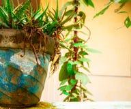 五颜六色的花盆 免版税库存图片