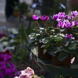 五颜六色的花种类 免版税库存照片