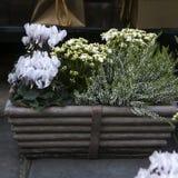 五颜六色的花种类 库存照片