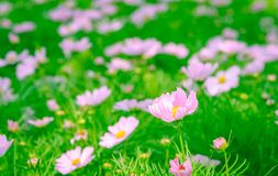 五颜六色的花绿色留下背景 库存图片