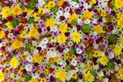 五颜六色的花背景 免版税库存图片