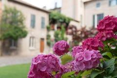 五颜六色的花花束在庭院意大利里 免版税库存图片