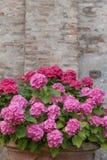 五颜六色的花花束在庭院意大利里 免版税库存照片