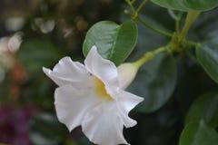 五颜六色的花花束桃红色白色紫色桔子 免版税库存照片