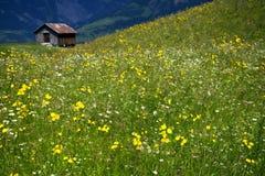 五颜六色的花草甸 免版税库存照片