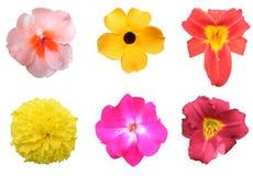 五颜六色的花装箱 库存图片