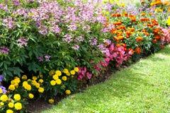 五颜六色的花设计在庭院里 免版税图库摄影
