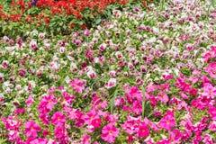 五颜六色的花,文本的空间纹理作为Backgroung的 库存照片