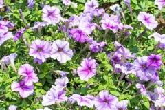 五颜六色的花,文本的空间纹理作为Backgroung的 免版税库存图片