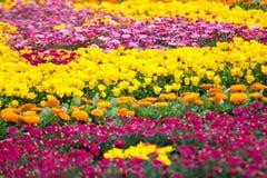 五颜六色的花,横滨 免版税库存照片