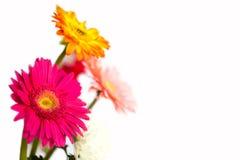 五颜六色的花,隔绝在白色背景 免版税库存图片