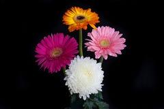 五颜六色的花,隔绝在黑背景 库存图片