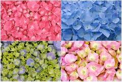 五颜六色的花-接近  图库摄影