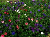 五颜六色的花 库存图片