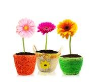 五颜六色的花gerber 图库摄影