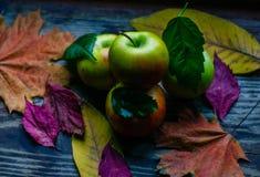 五颜六色的苹果秋天收获  库存照片