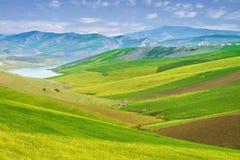 五颜六色的草甸在摩洛哥 免版税库存照片