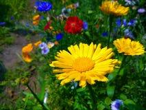 五颜六色的草甸开花照片 库存照片