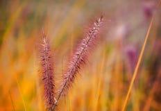 五颜六色的草甸 库存照片