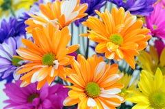五颜六色的菊花我 库存照片