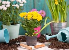 五颜六色的菊花照片在罐的在木篱芭附近 库存照片