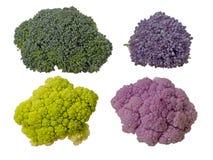 五颜六色的菜,在白色隔绝的小花 未加工的花椰菜,硬花甘蓝和紫色发芽 健康分类 库存图片