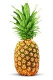 五颜六色的菠萝 免版税库存照片
