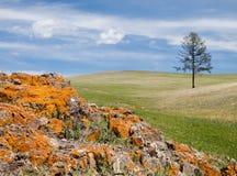 五颜六色的蒙古语晃动干草原 免版税图库摄影