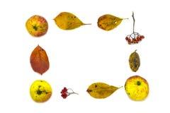 五颜六色的蔬菜、水果、秋叶和莓果时髦的框架  在空白背景的顶视图 免版税库存图片