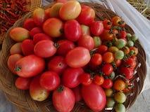 五颜六色的蕃茄 免版税图库摄影