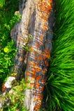 五颜六色的蘑菇生锈的木日志 图库摄影