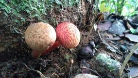 五颜六色的蘑菇 免版税库存图片