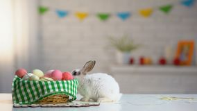 五颜六色的蛋篮子用在桌,假日问候,动物上的逗人喜爱的复活节兔子 股票录像