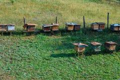 五颜六色的蜂箱在一个绿色草甸 库存照片