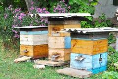 五颜六色的蜂箱在庭院里 库存照片