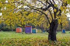 五颜六色的蜂箱在秋天时间庭院里 库存图片