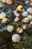 五颜六色的蜗牛壳 图库摄影