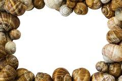 五颜六色的蜗牛轰击背景 免版税库存图片