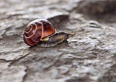五颜六色的蜗牛 库存照片