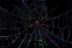 五颜六色的蜘蛛网 免版税库存照片