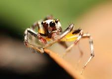 五颜六色的蜘蛛 图库摄影