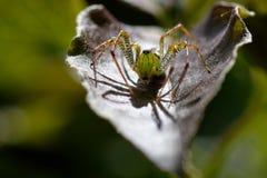 五颜六色的蜘蛛 免版税库存照片