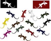 五颜六色的蜥蜴 库存图片