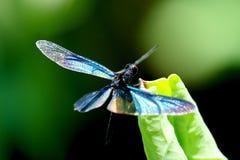 五颜六色的蜻蜓叶子莲花 库存照片